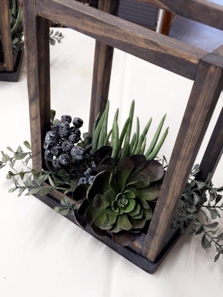 Succulent Stems Image